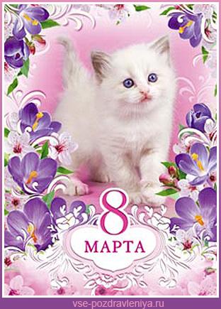 фото с 8 марта с котятами